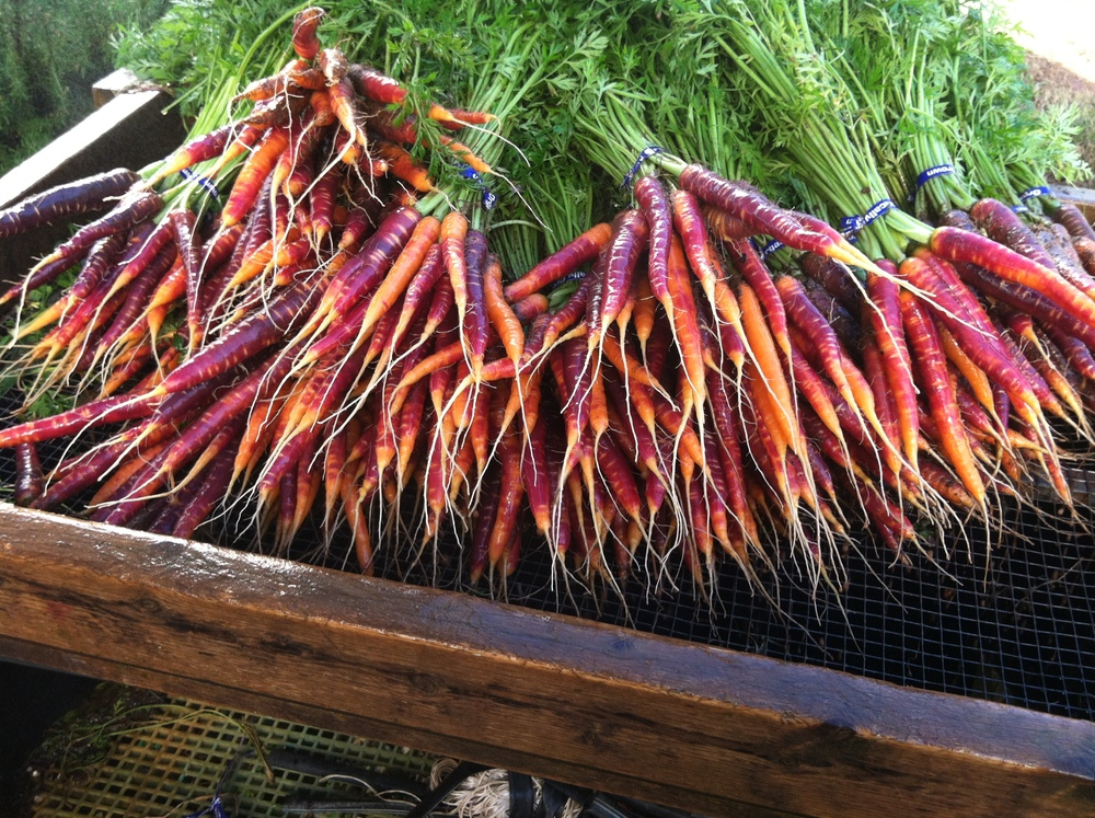 S-Haze-Carrots.jpg