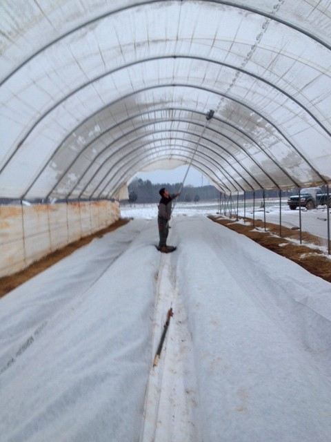 Orlando clearing ice off of the Haygrove hoophouses - FEB 2014