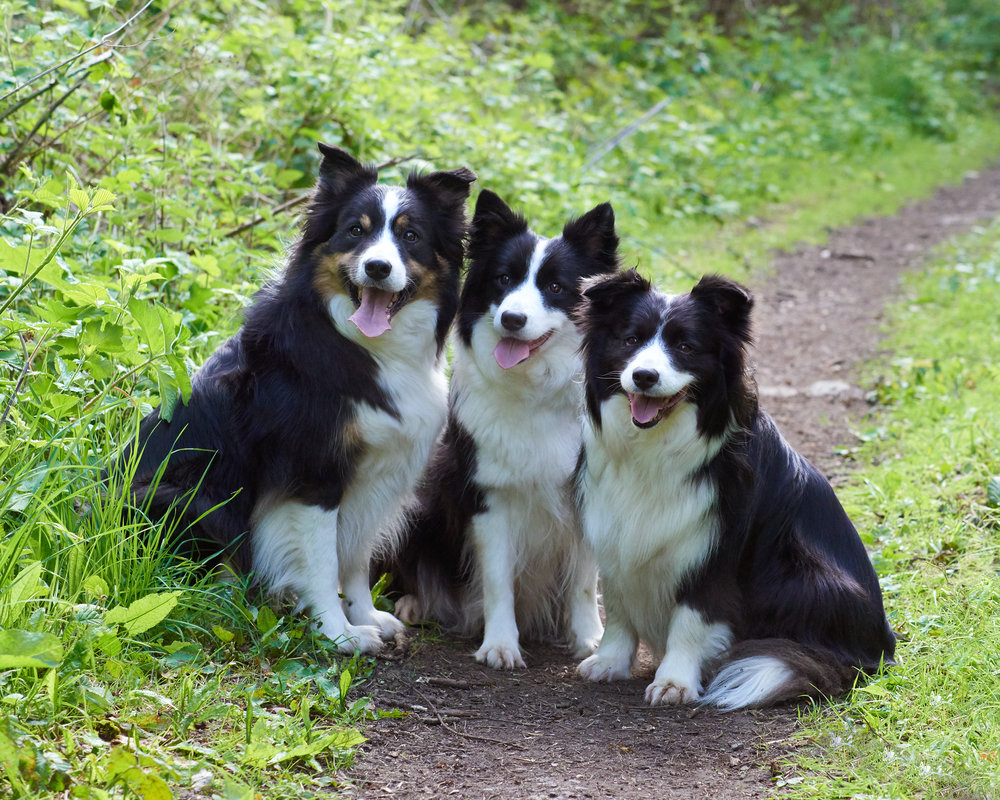 photography dogs park walk natural classic portrait