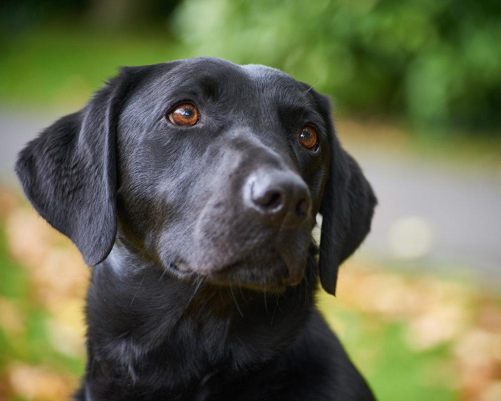 dog portrait photography melton mowbray park leicestershire