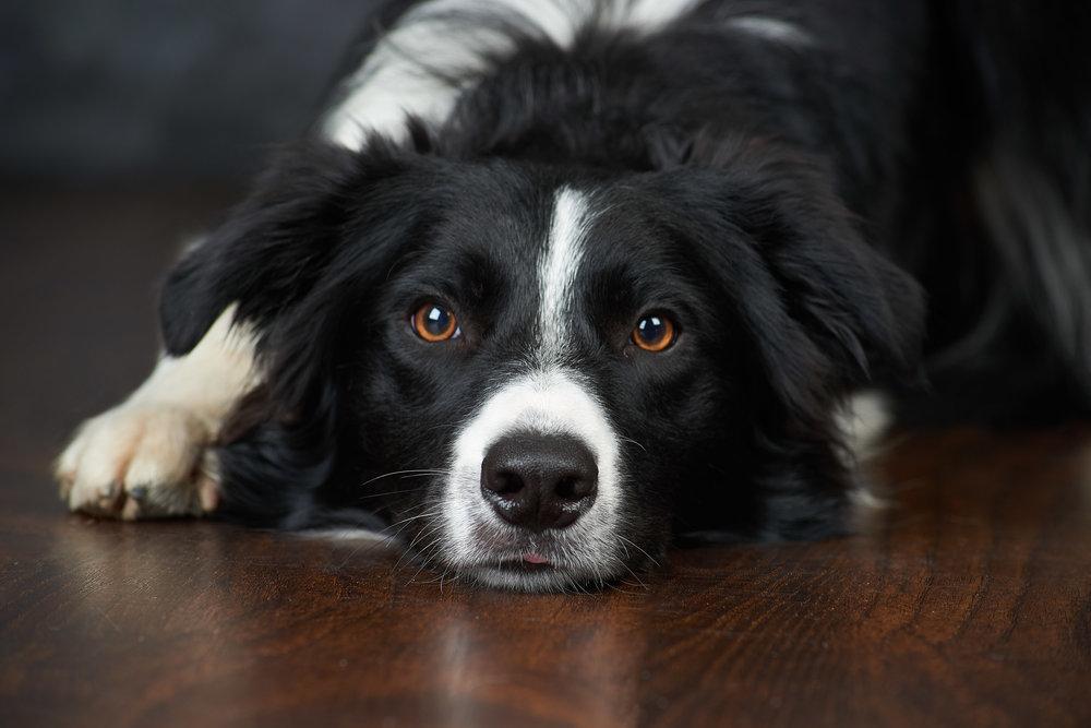 photoshoot print pet portrait photography