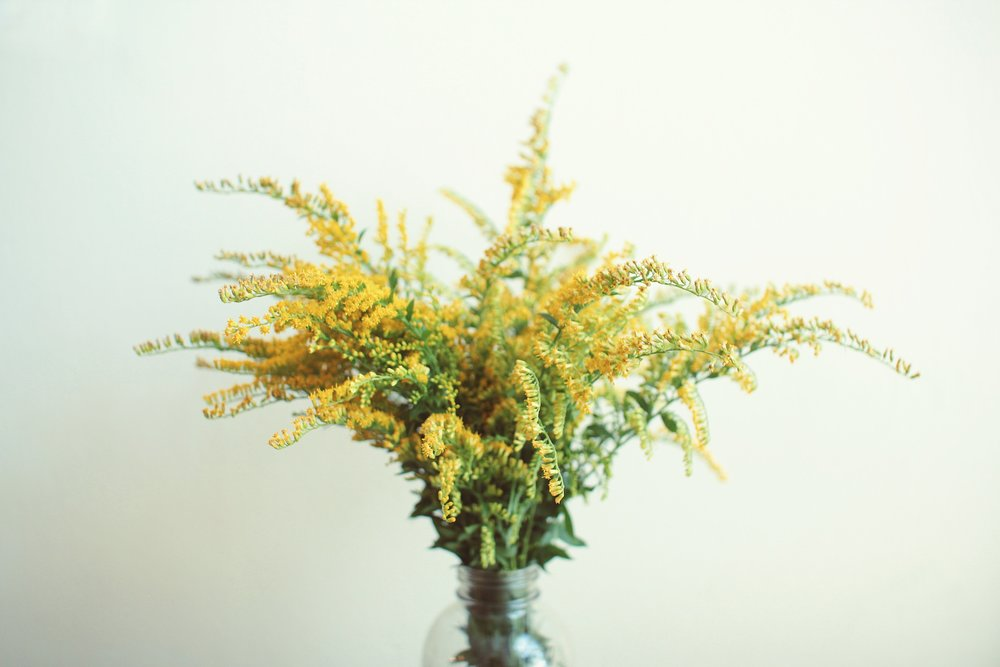 Golden rod: properties, use and contraindications 92