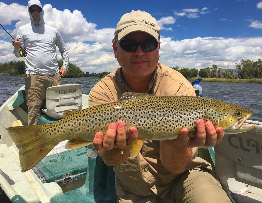 "22"" Brown Trout on The Madison River"