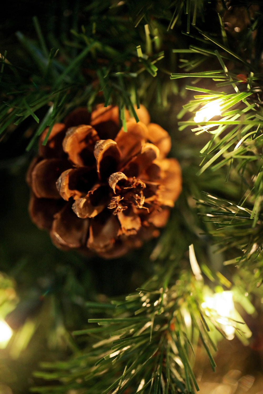 MLE_HolidayParty13-002.jpg
