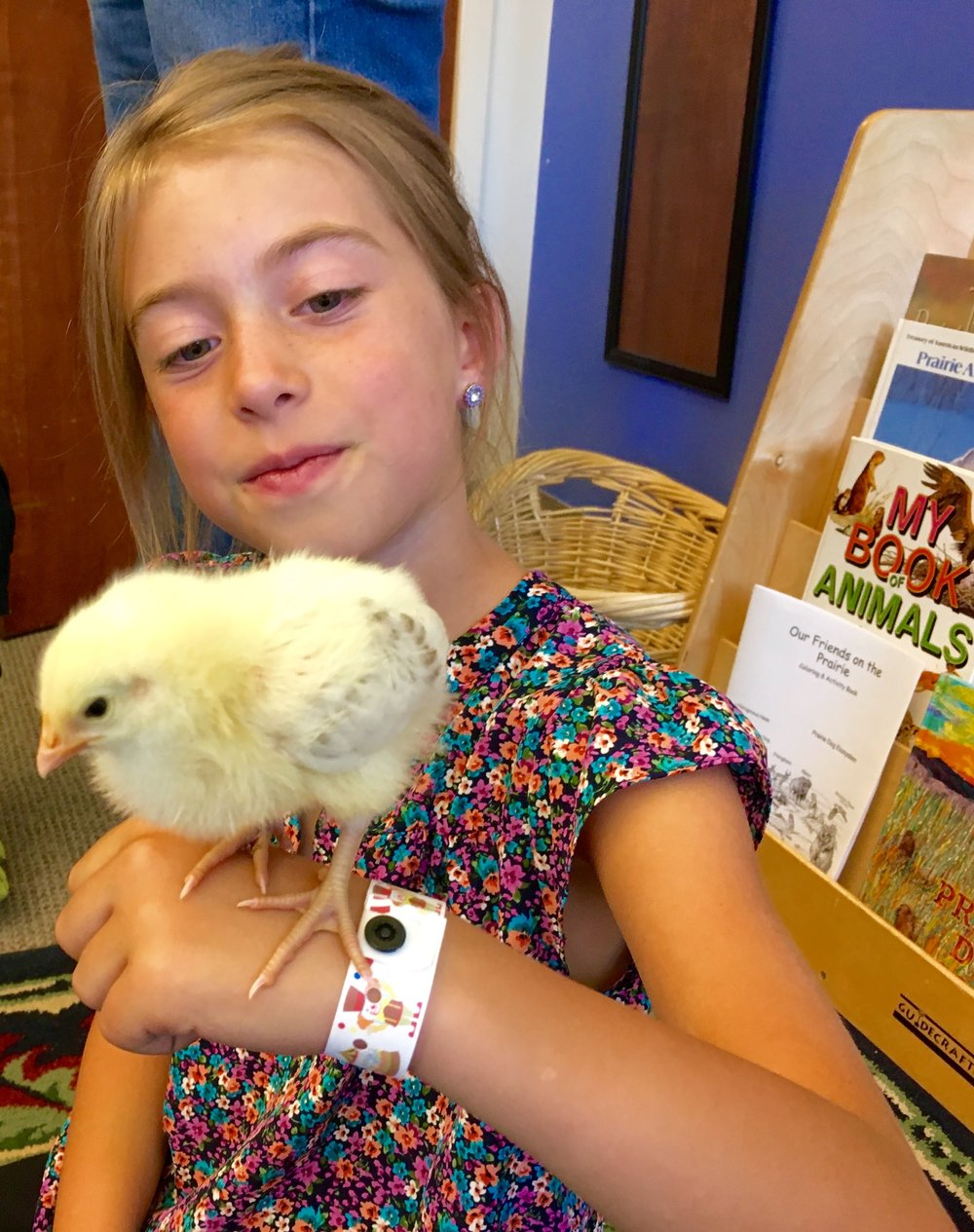 Read about the 2nd & 3rd Grade class raising baby chicks!!