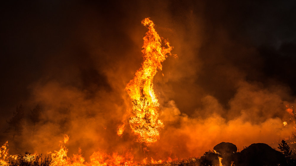 A pine tree torches during the Britannia Mountain fire on August 31st, 2018.