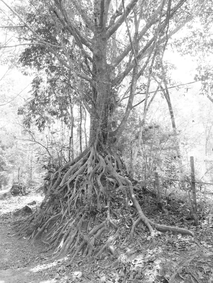 ROOTS: the part of a plant that attaches it to the ground or to a support, typically underground, conveying water and nourishment to the rest of the plant via numerous branches and fibers.