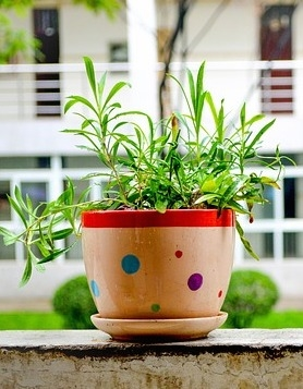 Image via Pixabay / If you have houseplants, congratulations! You are already a container gardener!
