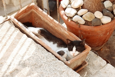 Image via Pixabay /  Consider how much space you are working with. Container gardening can happen on a windowsill, porch, balcony, or even your front stairs. The most important thing is that the space you claim for your containers have access to sunlight and the rest is pretty negotiable. Be prepared to fight your cat for the best sunny spots. Also, cats are really adorable assholes.