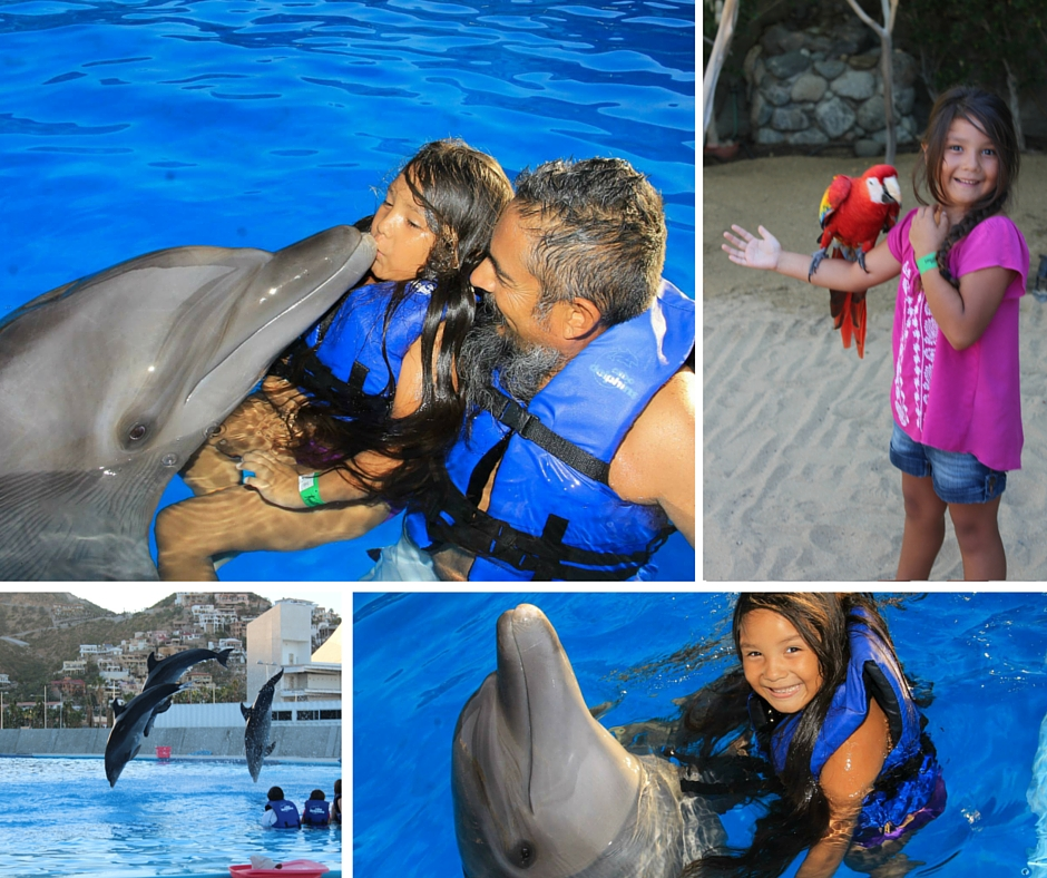 Dolphin Encounter at the marina. Arrive an hour before your scheduled time.