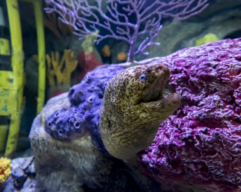 Moray Eel at Ocean Explorers Photo credit:Seaworld