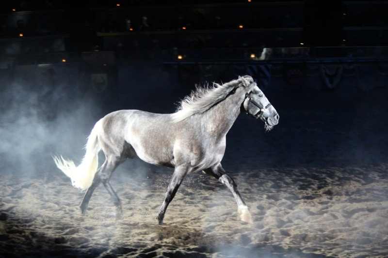 The beautiful Andalusian shown in a more natural way during the show, just stunning to watch.