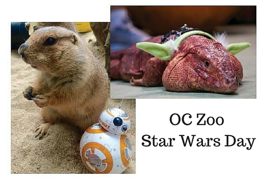 OC+Zoo+Star+Wars+day.png