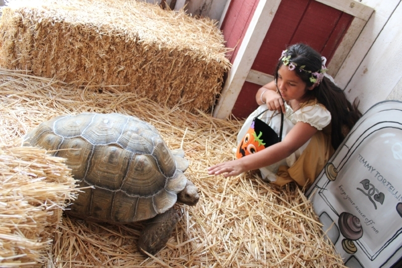 Turtle whisper, She interacted with every one of the animals, reptiles and insects inside the Livery Stables… except for the worms and roaches that is!