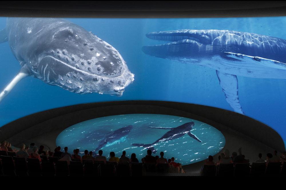 5_Honda Pacific Visions Theater_Whales_CourtesyofAquariumofthePacific.jpg