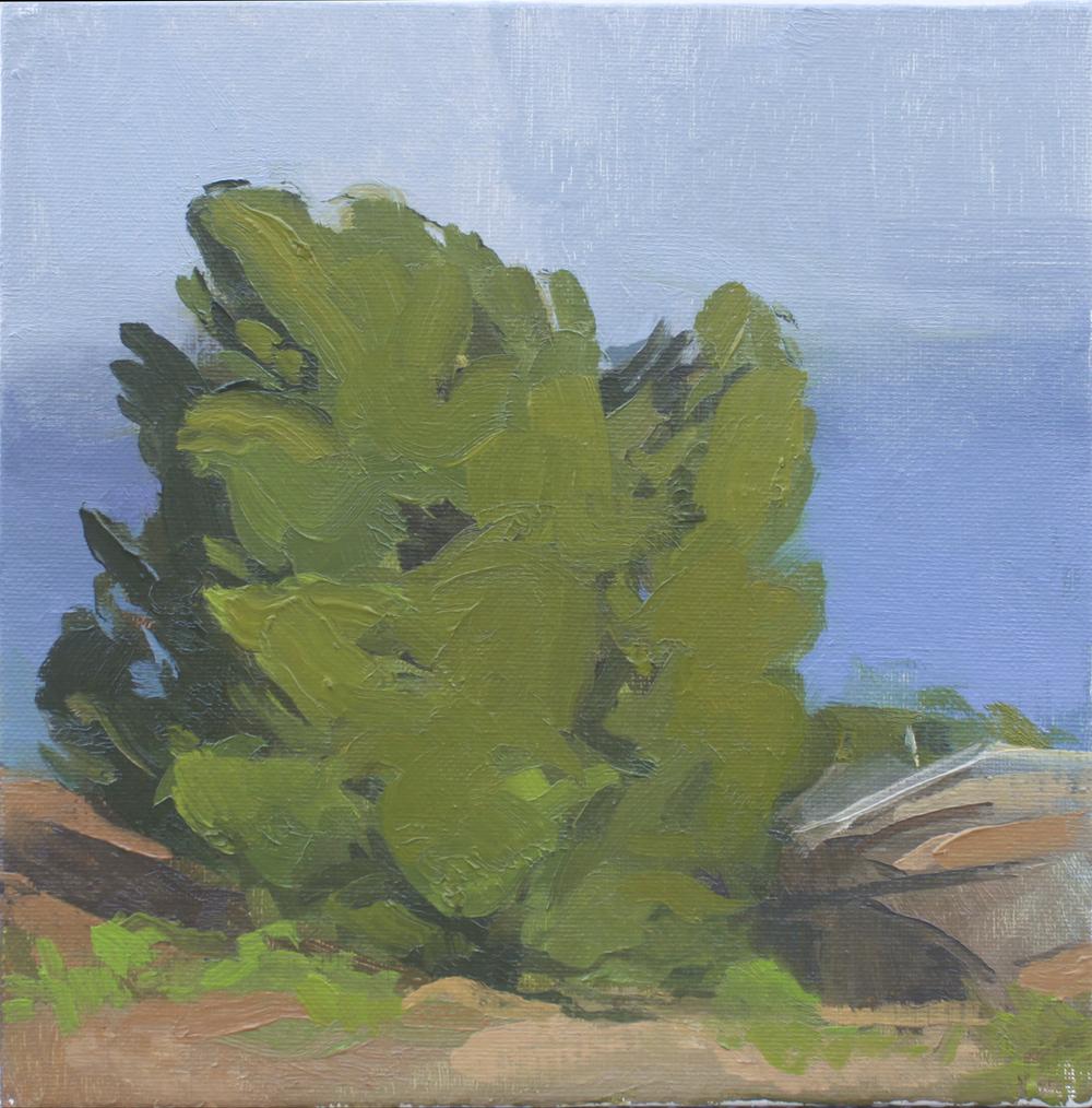"""tree on dartmoor   oil on canvas  8x8""""  2013"""