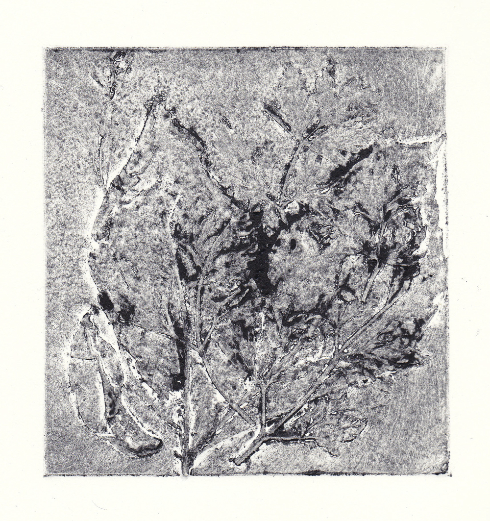"late spring   collagraph print  5x5""  2012"