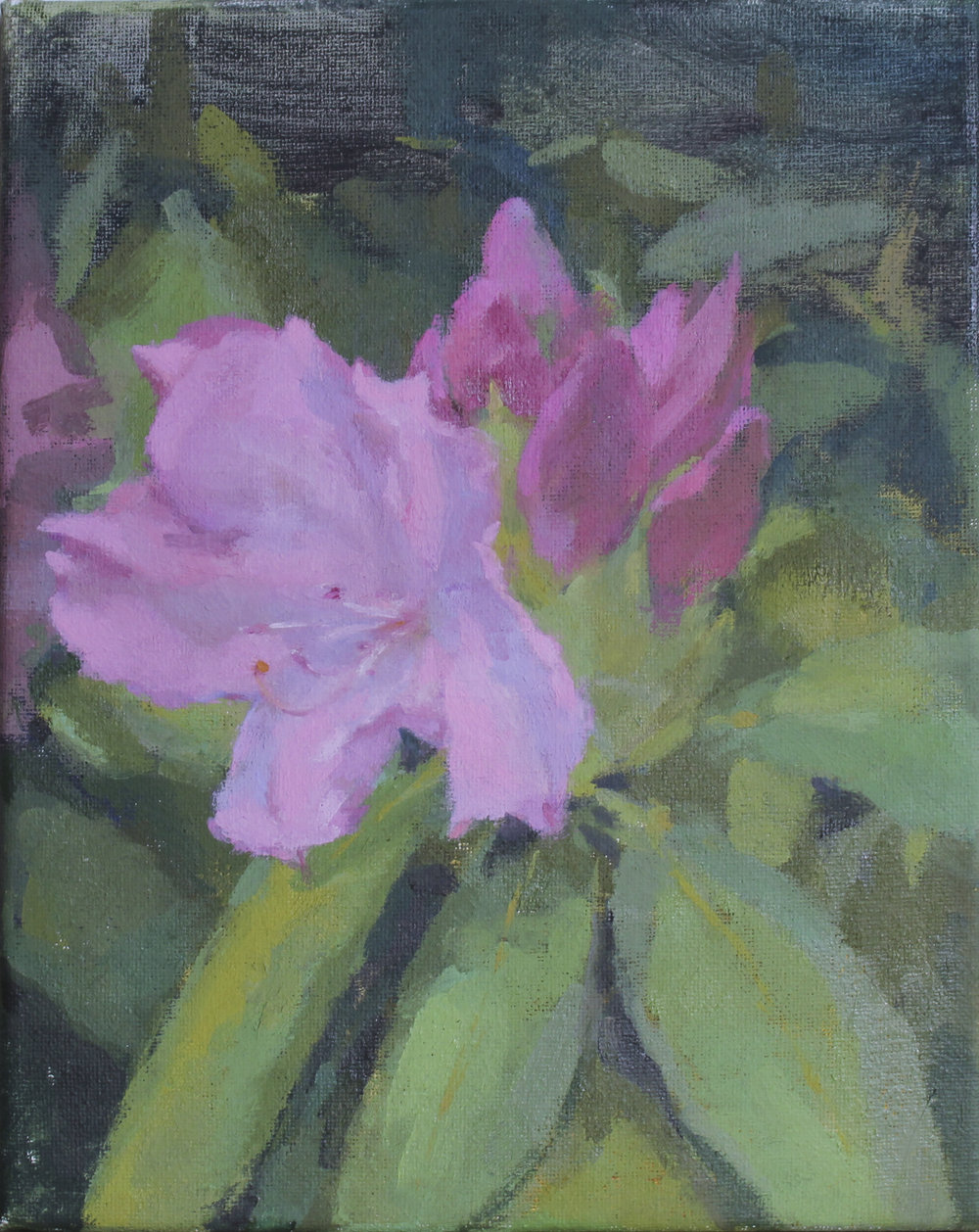 "pink rhododendrons   oil on canvas  8x10""  2018   purchase"