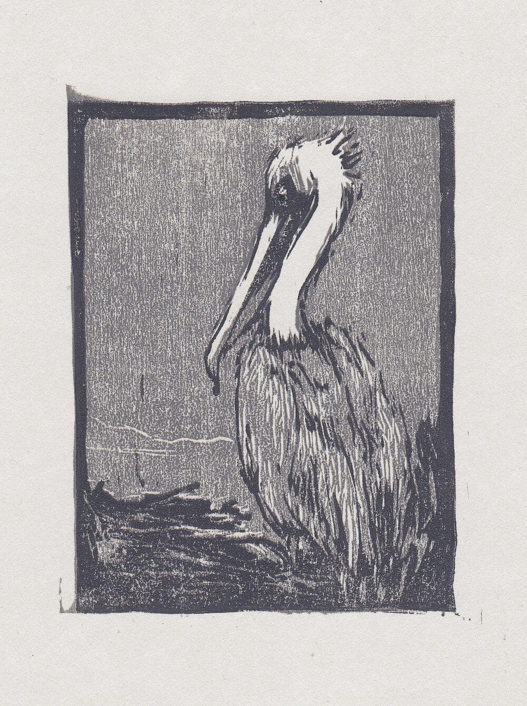 "brown pelican   woodblock print  edition of 40  3x4""  2013"