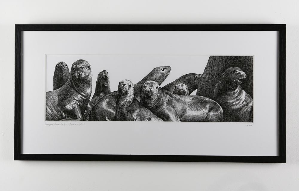 Steller Sea Lions - Original Pen & Ink Drawing — Rally Caller
