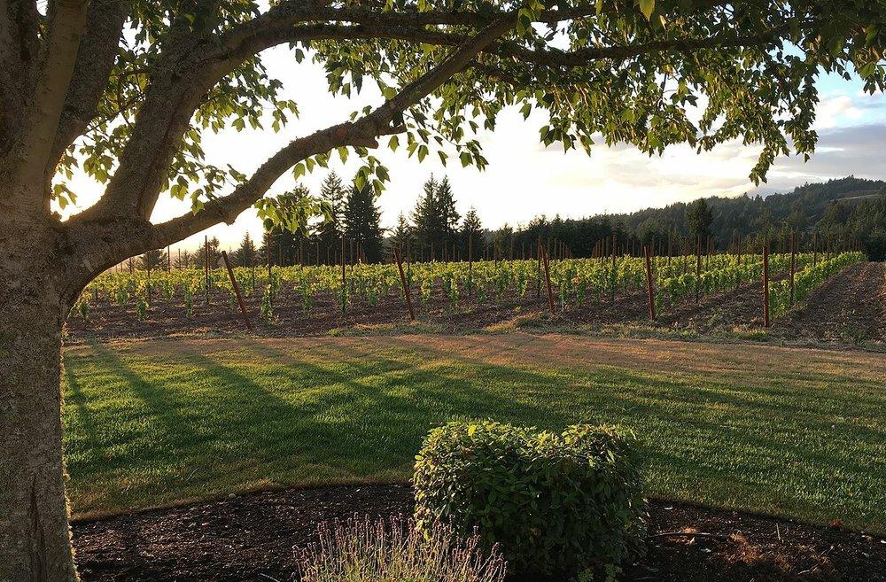 Zena-vineyard.jpg