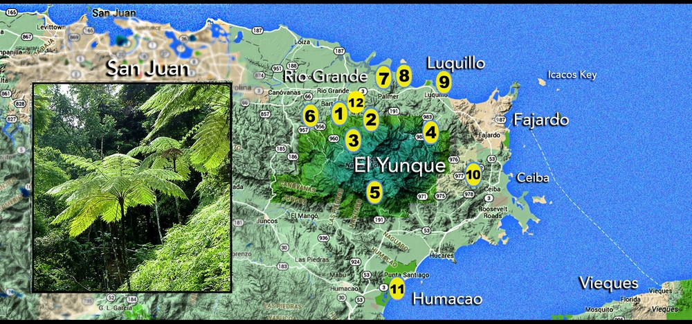 map of east end puerto rico.jpg