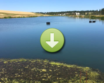 PROVEN TO TREAT THIS GOLF COURSE IRRIGATION POND ALGAE IN 2 MONTHS (CLICK IMAGE TO VIEW)