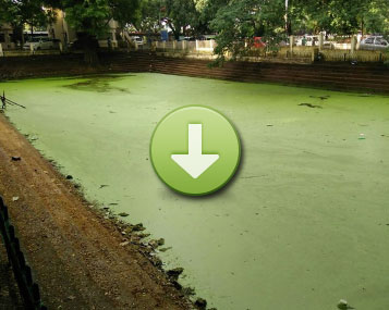 THE ENTIRE SURFACE OF THIS POND HAD A MASSIVE ALGAL BLOOM, FOUL SMELL, AND MOSQUITO INFESTATION (CLICK IMAGE TO VIEW)