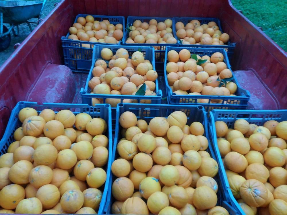 Oranges for Moria: Dec 2015-Mar 2016