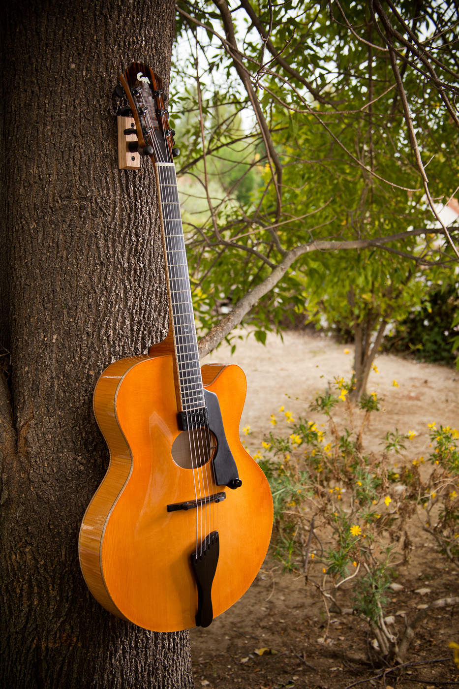 Spruce, Maple Archtop Acoustic