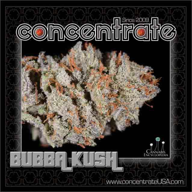 conc-bubaksh1-rgb.jpg