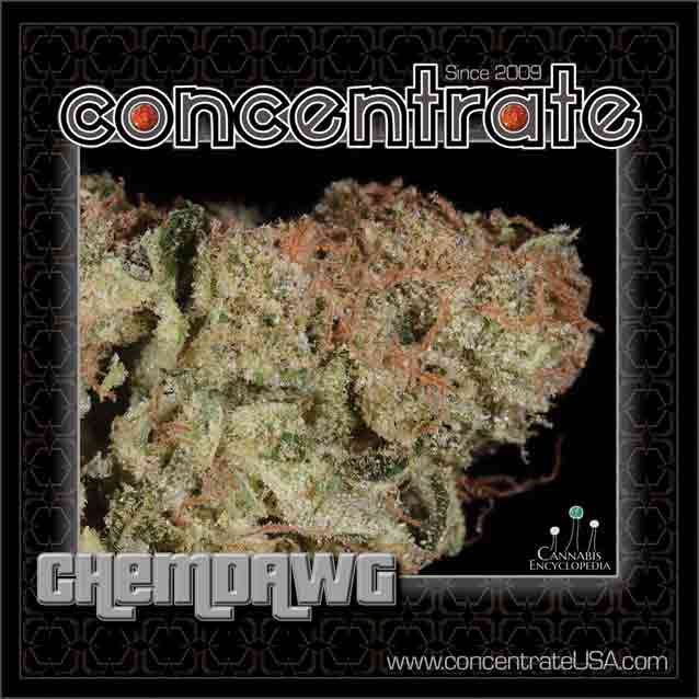conc-chmdwg4-rgb.jpg