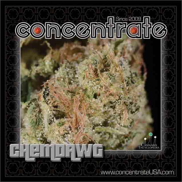 conc-chmdwg6-rgb.jpg