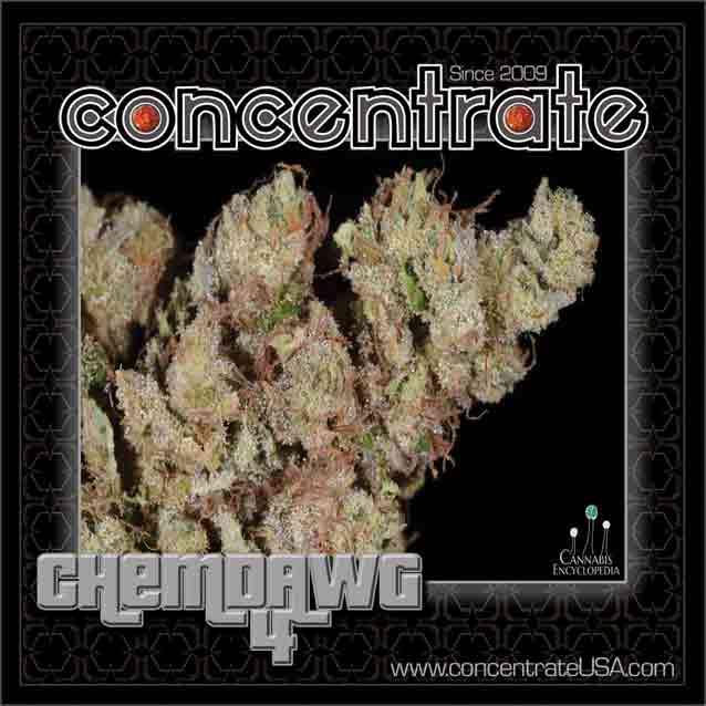conc-chmdwg4-3-rgb.jpg