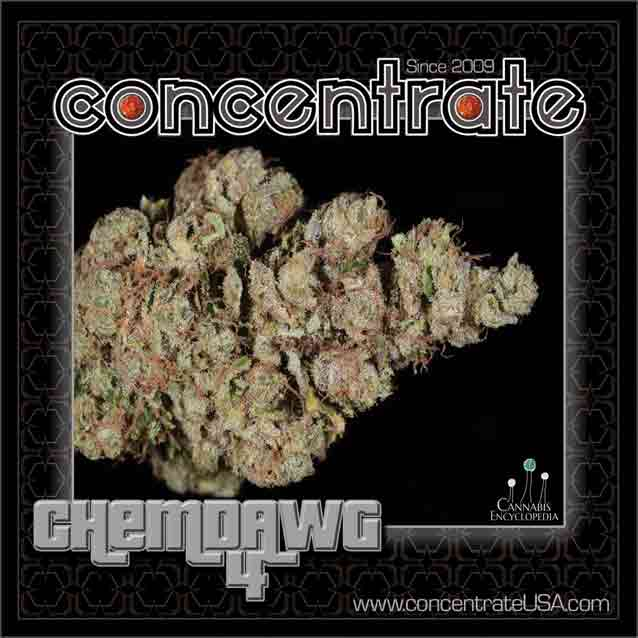 conc-chmdwg4-1-rgb.jpg