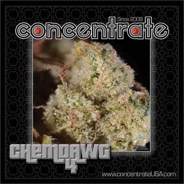conc-chmdwg4-4-rgb.jpg