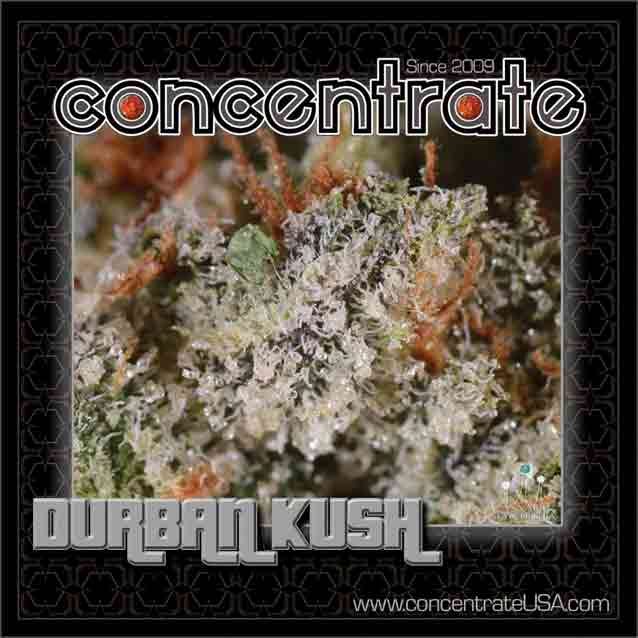 conc-drbnksh4-rgb.jpg