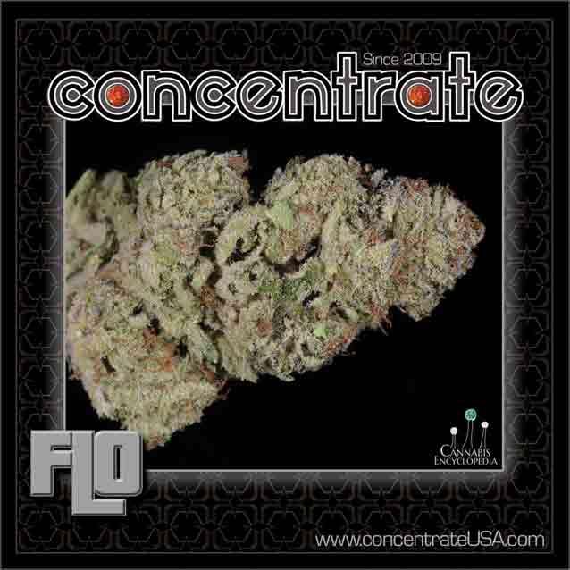 conc-flo2-rgb.jpg