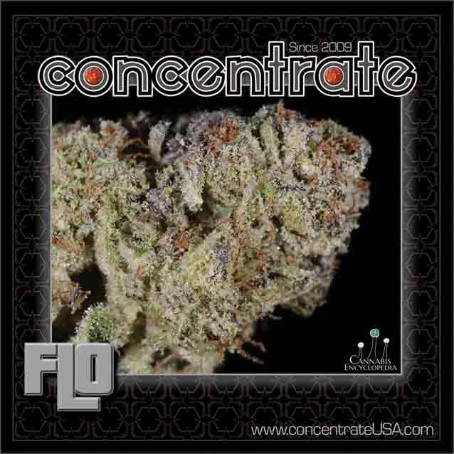 conc-flo3-rgb.jpg