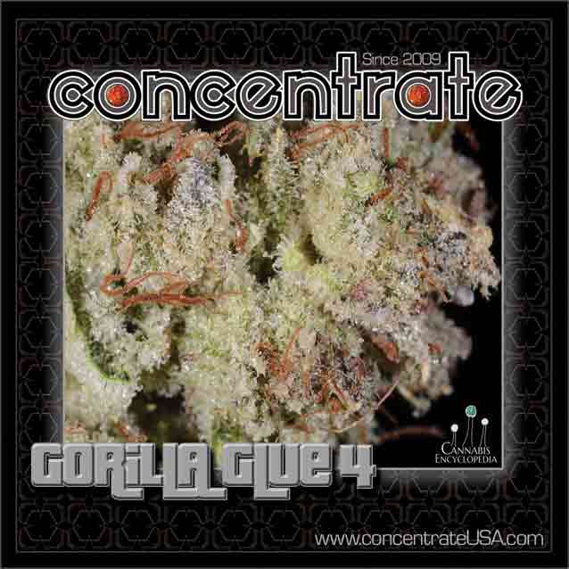 conc-gorlaglu2-rgb.jpg