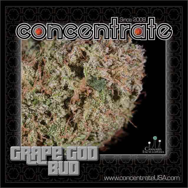 conc-grpgdbd6-rgb.jpg
