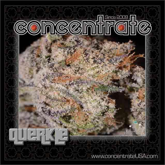 conc-querkle4-rgb.jpg