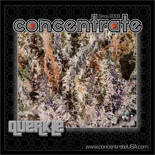 conc-querkle7-rgb.jpg