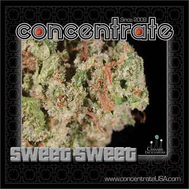 conc-swtswt3-rgb.jpg