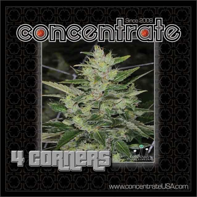 conc-4crnrs-live-4-rgb.jpg