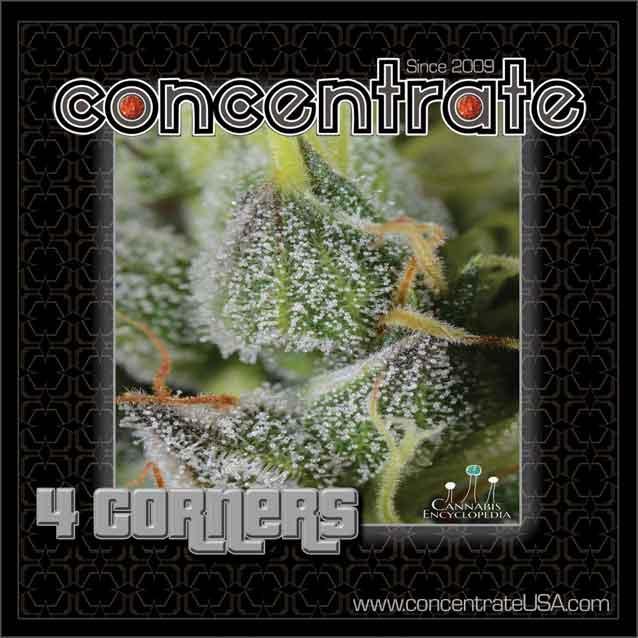 conc-4crnrs-live-5-rgb.jpg