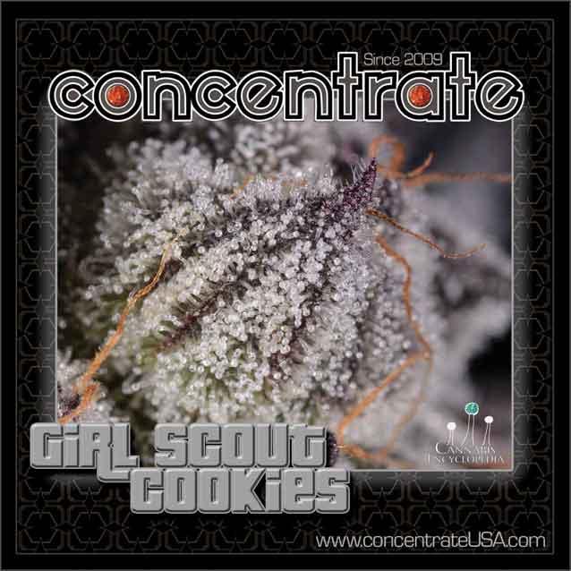 conc-grlsct-live-4-rgb.jpg