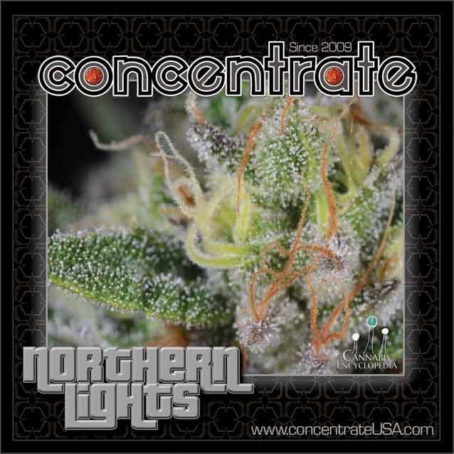 conc-nrthrnlts-live-4-rgb.jpg