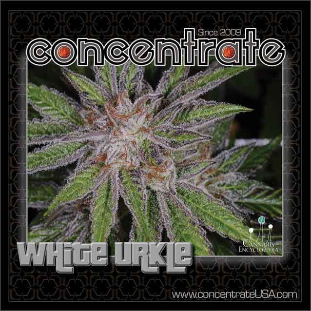 conc-whturkle-live-5-rgb.jpg