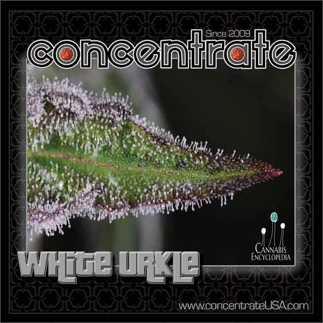 conc-whturkle-live-7-rgb.jpg